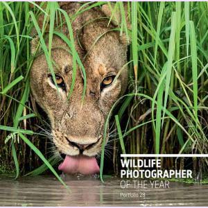 Portfolio 28: Wildlife Photographer of the Year